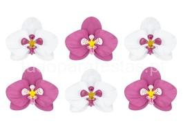 tropical flores